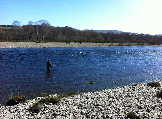 Catch A Spring Salmon Like This On The River Tay